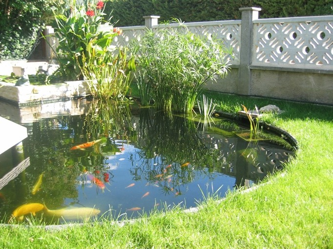 Un bassin avec ou sans carpes koi for Construction bassin de jardin
